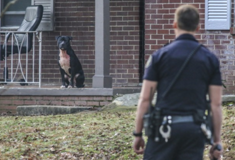 Atlanta Just Approved Harsher Penalties for 'Dangerous Dog' Owners